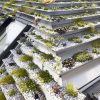 green-roof_040816_04