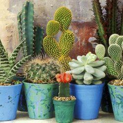 post_show_1486686642-1472313795-2_decoranco_con_cactus_y_suculentas_Decohunter