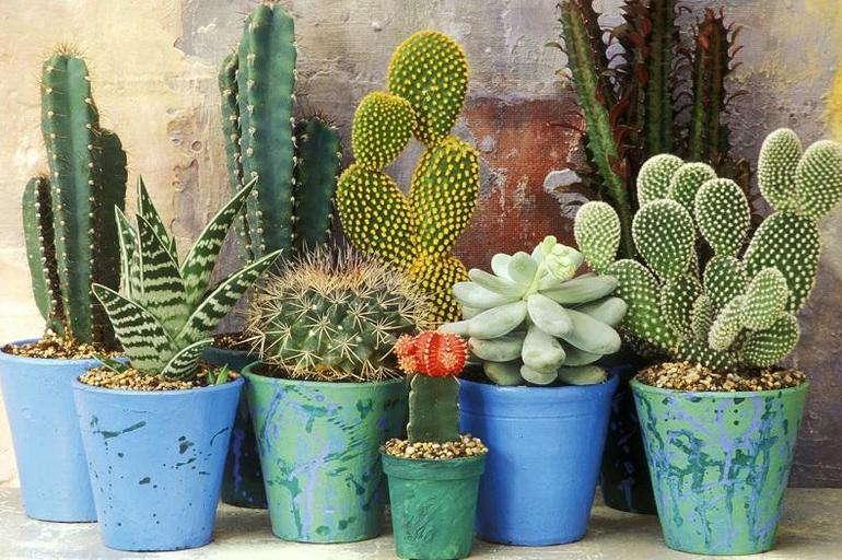 post_show_1486686642-1472313795-2_decoranco_con_cactus_y_suculentas_Decohunter